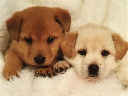 Dog Games Puppy Animals Dogs Animal Puppies