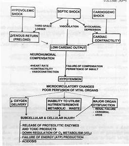 Septic Shock Pathophysiology Flowchart