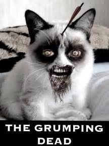 1000+ Images About Grumpy Cat And Zombies On Pinterest