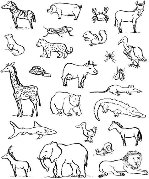 disegni da colorare animali sta disegno di animali da colorare