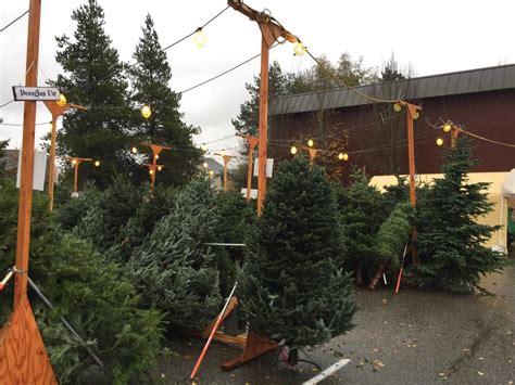 christmas tree lot holy rosary school