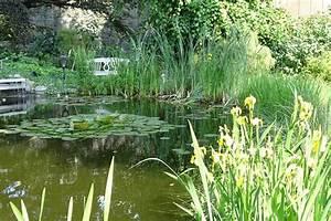 Kleiner Teich Im Garten : kleiner koi teich im garten picture of lubecker kronchen lubeck tripadvisor ~ Sanjose-hotels-ca.com Haus und Dekorationen