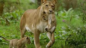 Wildlife Conservation Trust Launches Launches  U0026 39 Roadkills