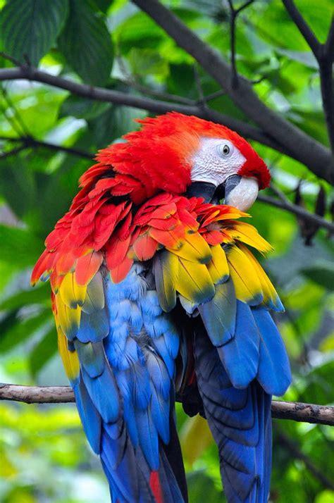big colorful bird colorful bird photograph