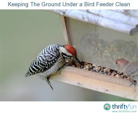 keeping the ground under a bird feeder clean thriftyfun