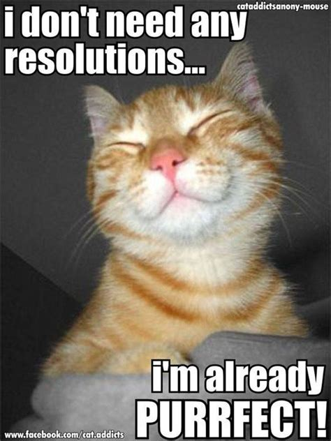 New Cat Memes - cat new year holiday cat memes kitty cat humor funny