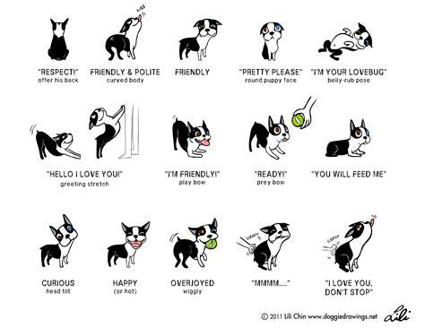 body language  dog   lot   joyful dog