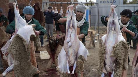 kurban bayrami fuer die freiheit und das leben aller tiere