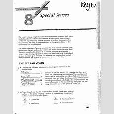 15 Best Images Of Anatomy And Physiology Worksheet Packets  The Muscular System Worksheets