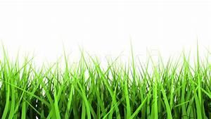 Green Grass On White Background. Matte Channel. ~ Clip #824567