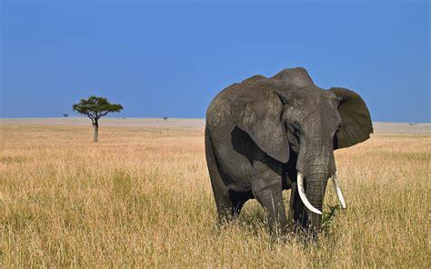 Desktop Wallpaper Elephant Hd Desktop Wallpapers 4k Hd