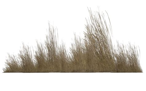 Tall Grass Transparent Png Pictures