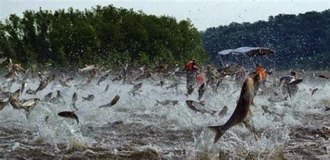 Asian Carp Attack Boat by Matt Of All Trades Asian Carp Attack Rowers These Are