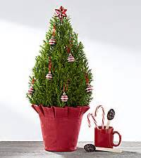 collections of mini real christmas tree cheap christmas decorations