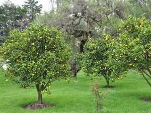 Quand Planter Lavande Dans Jardin : quand planter citronnier ~ Dode.kayakingforconservation.com Idées de Décoration