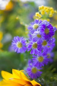 Pretty Purple and Yellow Flowers