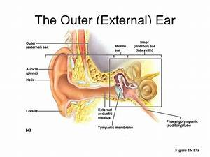 Outer Ear  U0026 Diseases Related To It