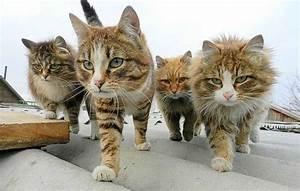 Animal En G : se ales de que tu gato podr a estar planeando matarte ~ Melissatoandfro.com Idées de Décoration