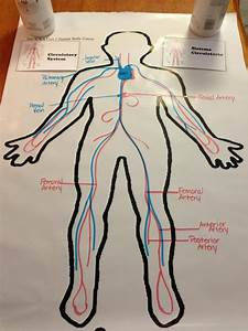 Circulatory System    Except We U0026 39 D Draw Animals And Their Systems