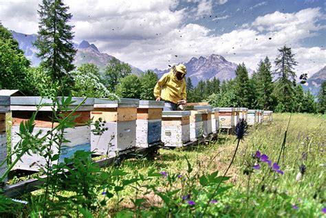 la maison du miel la maison du miel producteur hautes alpes