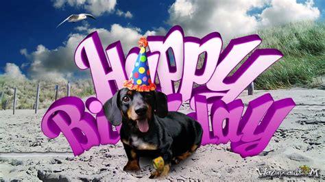 teckel dog dachshund   happy birthday youtube