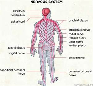 10 Interesting Nervous System Facts