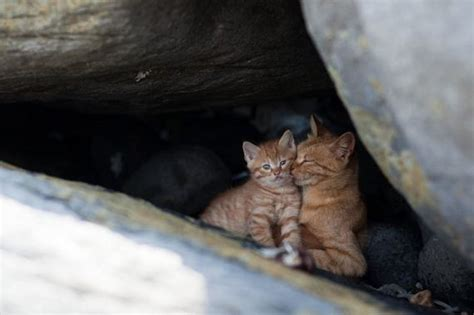 amazing   cat heaven island  japan barnorama