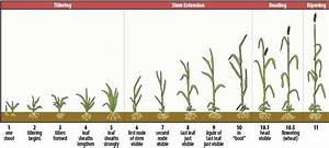 Wheat Production Considerations For 2014