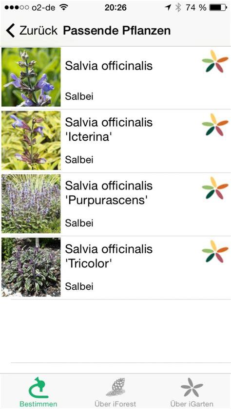 baum erkennungs app baum erkennungs app roter holunder frchtesamen with baum erkennungs app affordable plantnet