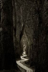 The long and winding road . . . | ''Le chant des forets ...