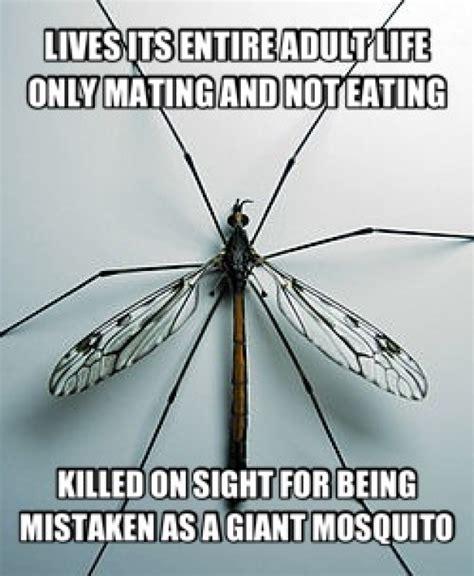 Fly Meme - misunderstood crane fly meme guy