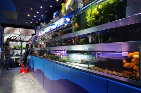 aquarium accessories shopping visit our shop for aquariums fish tanks marine tropical freshwater coral frags