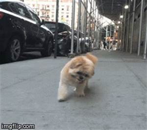 Dog Smiling GIFs - Find & Share on GIPHY