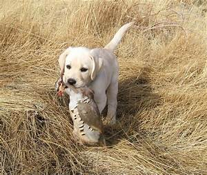 12 Puppies Trying Their Best to Be Hunting Dogs