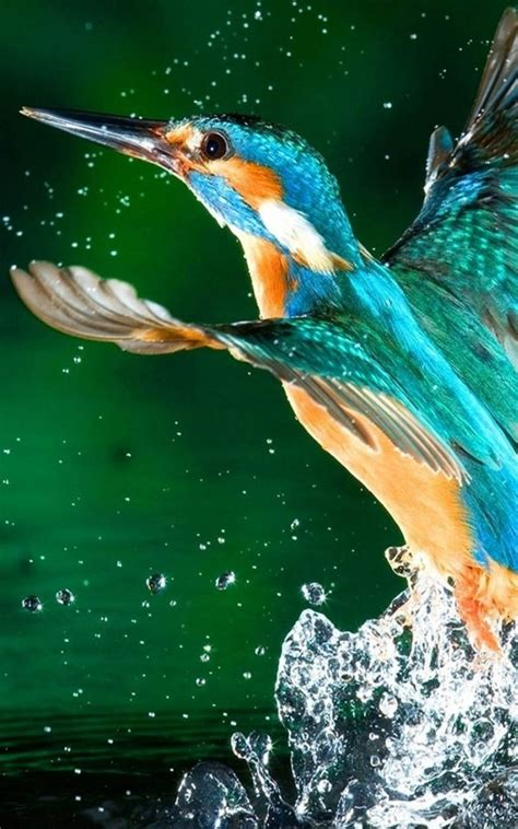 3d Birds Wallpapers by Kingfisher Bird Free 4k Ultra Hd Mobile