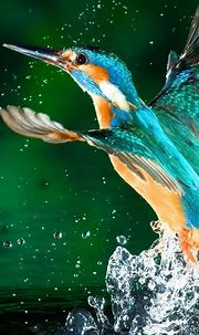 Kingfisher Bird 4K Ultra HD Mobile Wallpaper
