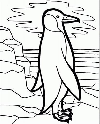Penguin Coloring Bird Pinguin Ausmalbilder Pinguine Zum