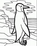 Penguin Coloring Pages Bird Penguins Printable Fun Lonely Sheets Preschool Cliparts Cartoon Printables Emperor Coloringkidz Rocks Popular sketch template
