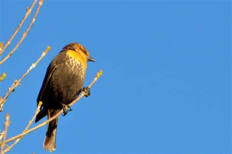 is a bird an omnivore edupic bird images