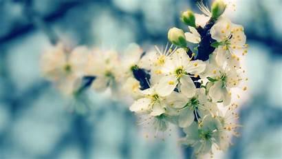Spring Blooming Desktop Wallpapers Glare Flowers Backgrounds