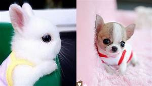 Cutest Animals! Cute baby animals Videos Compilation cute ...  Cutest
