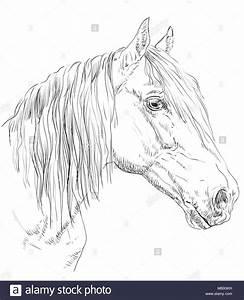 Pferdekopf Schwarz Weiß : orlow traber pferde portrait pferdekopf im profil in schwarzwei farbe auf wei em hintergrund ~ Watch28wear.com Haus und Dekorationen