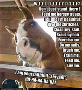 funny horse pictures with captions   Funny Horse Captions ...