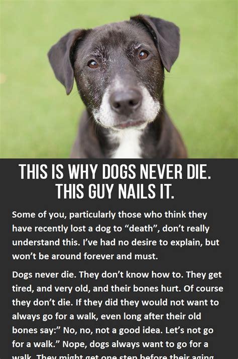 dogs  die