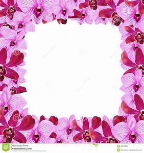 Orchid Flower Border Design Stock Illustration - Image ...