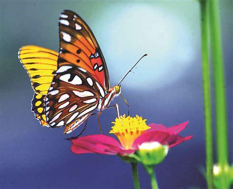 Mariposas Imagenes Gallery