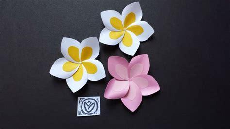 paper plumeria frangipani flower display  paper