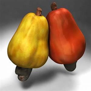 cashew tropical fruit 3d model