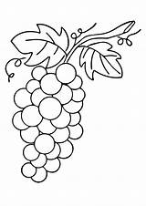 Grapes Coloring Grape Pages Printable Worksheets Drawing Leafy Fruit Vine Vines Parentune sketch template