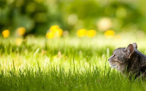 , Cute, Grass, Backgrounds,green, Smart Phone,lovely, Hd